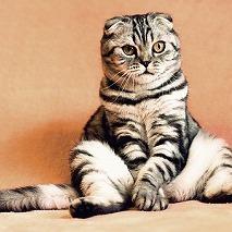 猫背について②