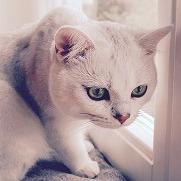 猫背について①